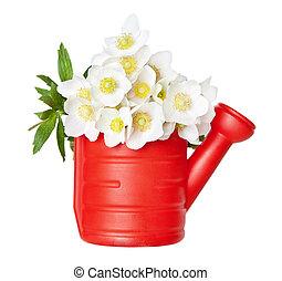 Beautiful white spring flowers