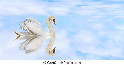 beautiful white swan on a quiet lake