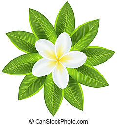 Beautiful white tropical flower. Vector illustration for...