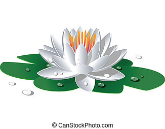 Beautiful white waterlily over white. EPS 8, AI, JPEG