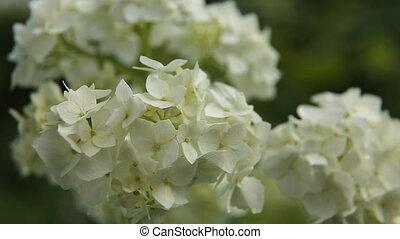 Beautiful white wildflower. - Closeup on beautiful flower....