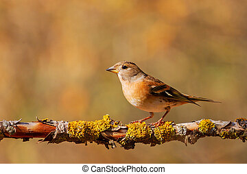 beautiful wild bird sits on a branch in the forest