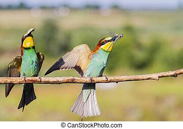 beautiful wild birds open wings sit on a branch