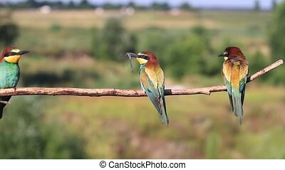 beautiful wild birds sitting on a branch with insects in...