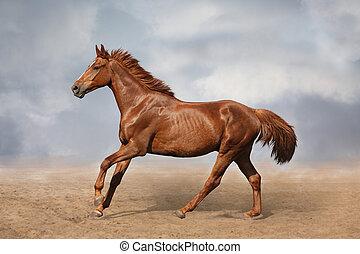 Beautiful wild brown horse galloping on sky