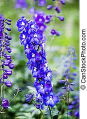 beautiful wild flower in the meadow: color purple