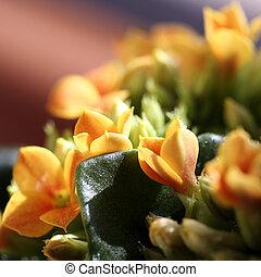 Beautiful wild flower.