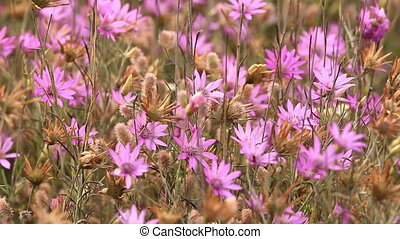 Beautiful wild flowers closeup??