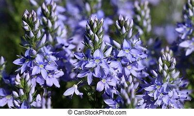 Beautiful wild flowers closeup