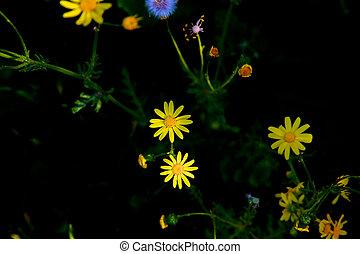 Beautiful wild flowers in Spring
