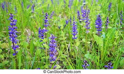 Beautiful wild flowers in summer field.