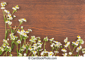 Beautiful wild flowers on wooden background.