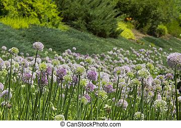 Beautiful Wildflowers Background