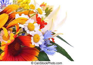 Beautiful wildflowers, chamomiles, chrysanthemums, cornflower isolated on white