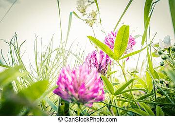 Beautiful wildflowers in Summer macro shot