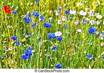 beautiful wildflowers in the meadow