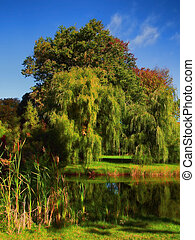 beautiful willow trees