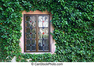 Beautiful window in a wall overgrown by thick green ivy