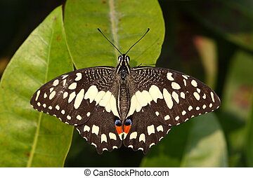 beautiful wing of butterfly