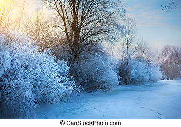 beautiful winter background; winter landscape On A Hoar Frost