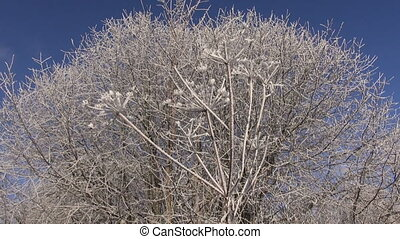 New year time hoarfrost rime - beautiful winter Christmas...