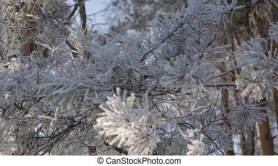 Beautiful winter fir-tree with snow