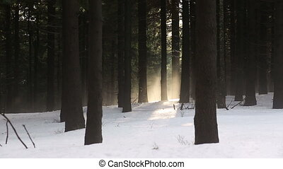 Beautiful winter fog mountain evergreen forest in Europe,...