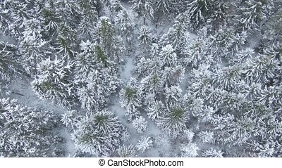 Beautiful winter forest. Aerial view from the drone. -...