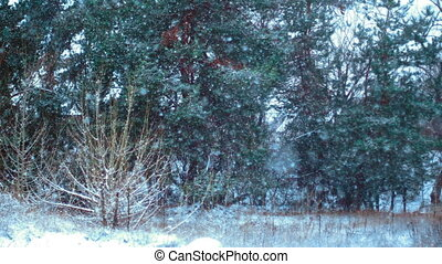beautiful Winter forest in the snow