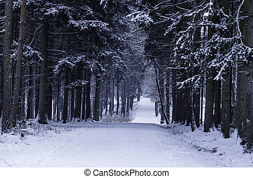Beautiful winter forest landscape