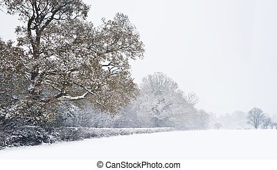 Beautiful winter forest snow scene with deep virgin snow ad trees fading into distance
