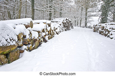Beautiful winter forest snow scene with deep virgin snow and fresh cut timber stacked on sides of path