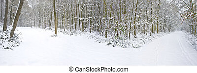 Beautiful winter forest snow scene with deep virgin snow and path splitting into two directions