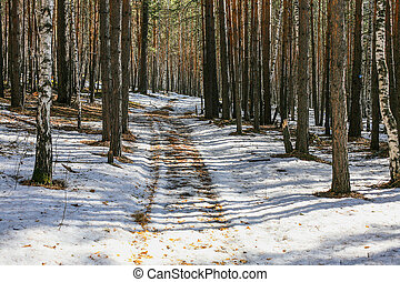 winter forest with a path in the sun