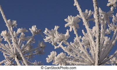 beautiful winter hoarfrost - beautiful winter time hoarfrost...