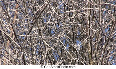 beautiful winter hoarfrost rime on forest tree and blue sky