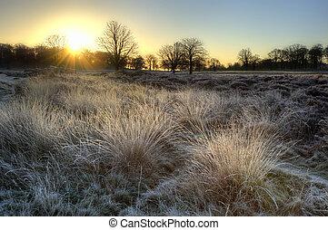 Beautiful Winter landscape across frosty fields towards silhouette trees on horizon into stunning colorful sunrise