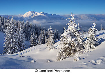 Christmas landscape. Spruce forest in winter