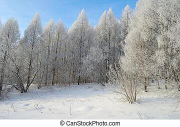 Beautiful winter landscape in forest