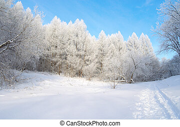 Beautiful winter landscape in forest with trees