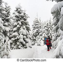 Beautiful winter landscape in the Carpathian mountain
