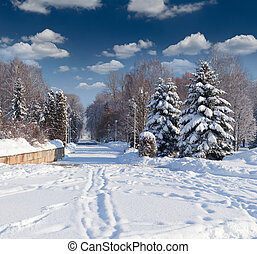 Beautiful winter landscape in the city park.