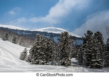 beautiful winter landscape in the forest