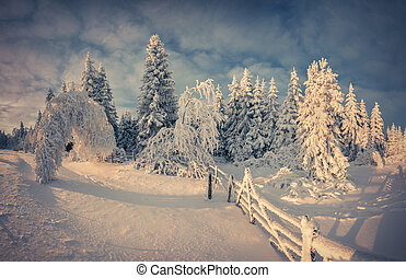 Beautiful winter landscape in the mountain forest. Retro style.