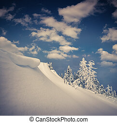 Beautiful winter landscape in the mountain forest