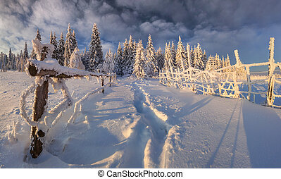 Beautiful winter landscape in the mountain forest.