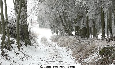 Beautiful winter landscape. Scenic winter landscape. Winter foggy landscape.