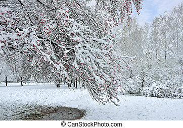 Beautiful winter landscape - snowfall in the city park