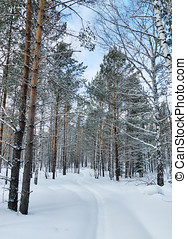 Beautiful winter landscape with snowy path in pine woods