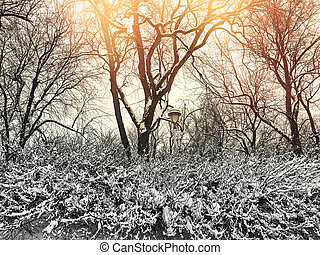 Beautiful winter park in sunset